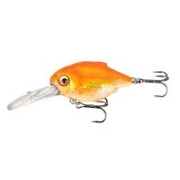DR 02-Goldfish