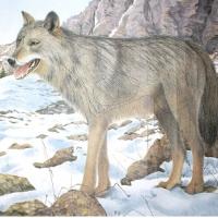 Мишень JVD бумажная Волк